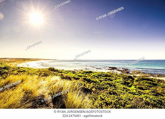 Colorful and vibrant seaside beach sunrise with bright rays of piercing light on lush coastal foliage. Scamander, Tasmania, Australia