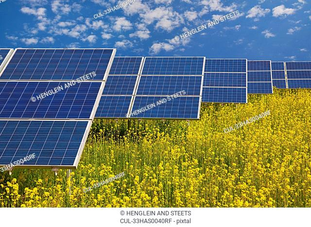 Solar panels in rapeseed field