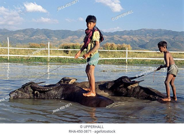 Boy riding a water buffalo Stock Photos and Images | age fotostock