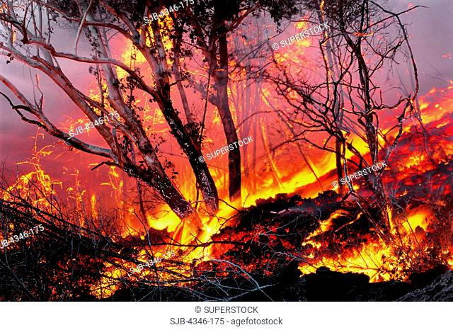 A'a Lava Burning Through a Forest