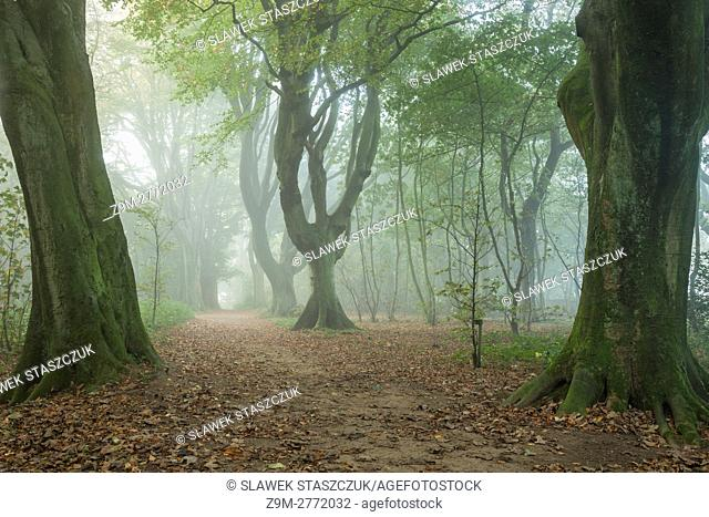 Misty autumn morning in Stanmer Park, East Sussex, England. South Downs National Park