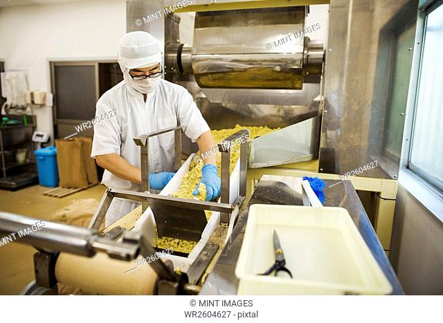 Workers in apron and hat wearing blue gloves collecting freshly cut soba noodles from the conveyor belt