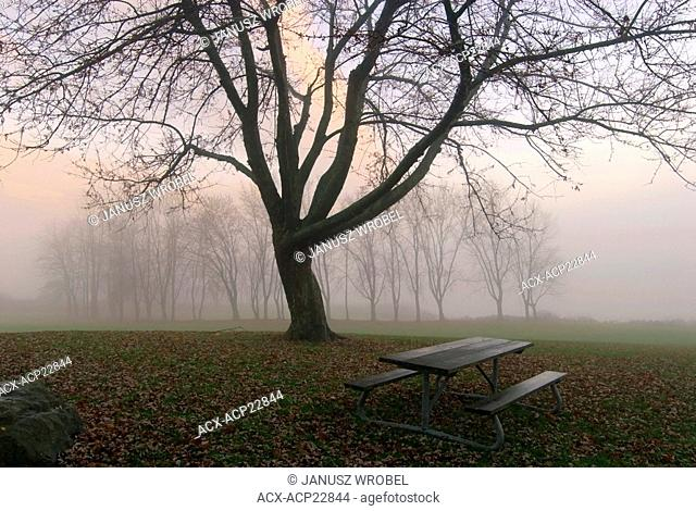 Fall Scene with park benches in Christie Lake conservation area, Ontario, Canada