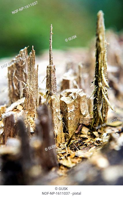 Close-up of a tree stump