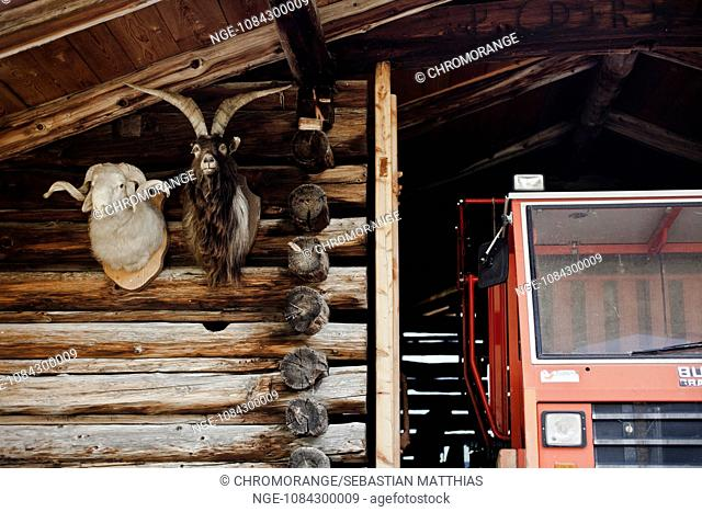 Head of a ram and a goatu as huntin trophies on the outside of a south tyrol farm house with partly a farming vehicle in the picture