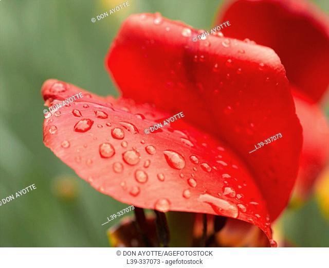 Flower in a garden