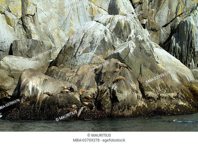 North America, USA, Alaska, Seward, Kenai Fjords National Park, Resurrection Bay, Steller sea lions in the sun on rock