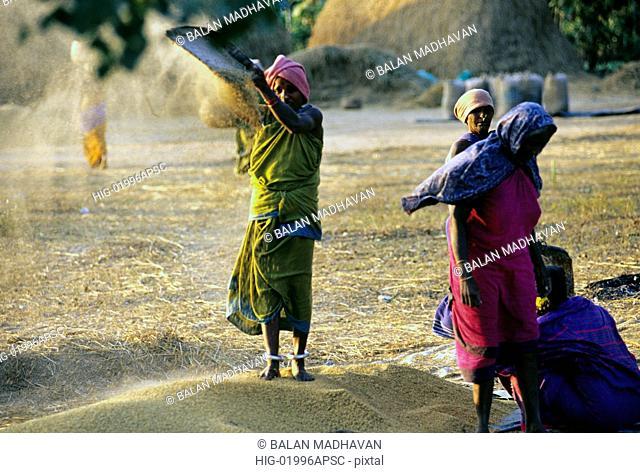 WINNOWING IN RURAL ANDHRA PRADESH, INDIA