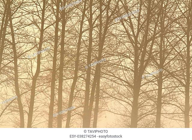 interesting foggy forest, detail on tree branches