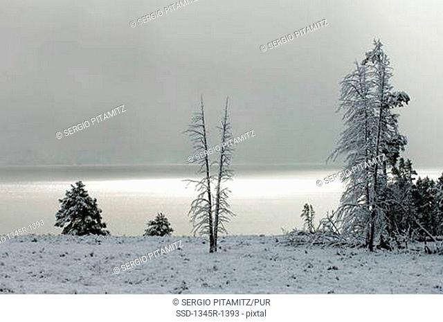 Snow covered trees at the lakeside, Yellowstone Lake, Yellowstone National Park, Wyoming, USA