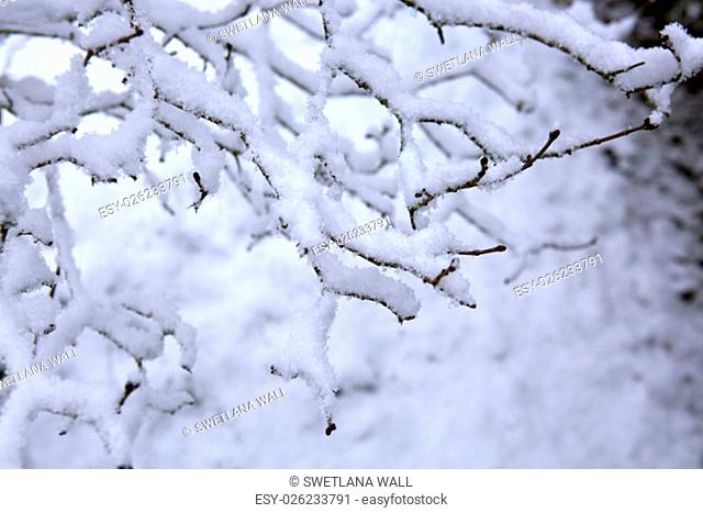 Close Up Detail shot of a twig covered with ice and snow on a cold winter day