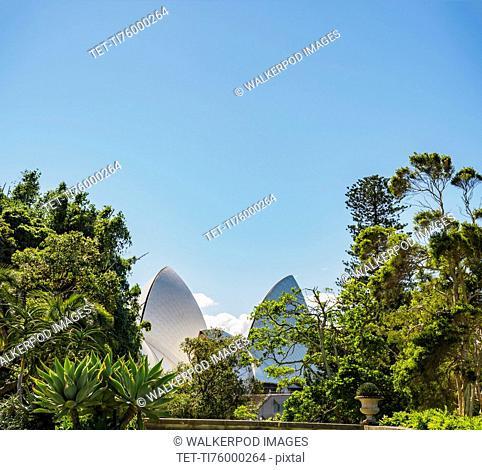 Australia, New South Wales, Sydney, Sydney Opera House behind trees