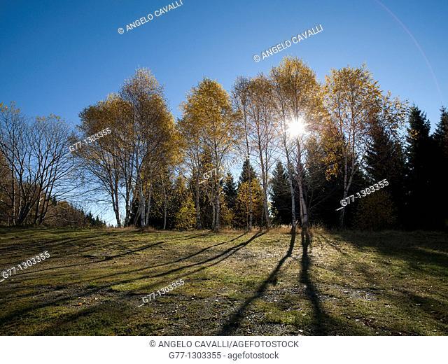 Autumn in Italian Alps, Stresa, Lake Maggiore, Piedmont, Italy
