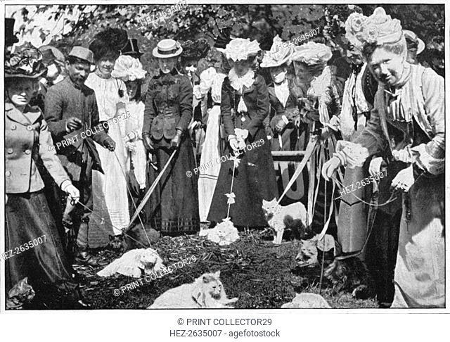 Judging cats at the Royal Botanic Gardens show, Kew, London, c1900 (1901). Artist: Unknown