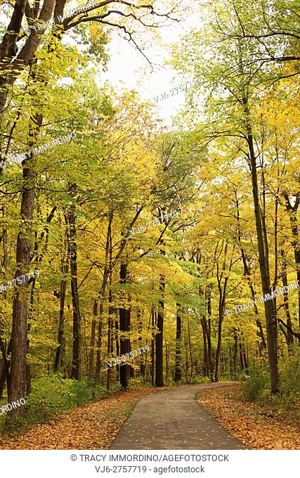 A paved path through a forest preserve with fall foliage at Petrifying Springs Park in Kenosha, Wisconsin, USA