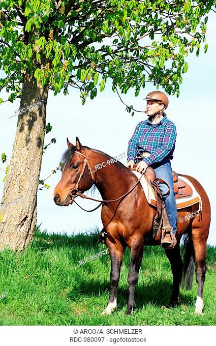 Rider with American Quarter Horse, stallion, bay