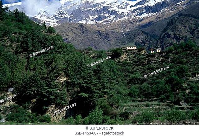 Trees with a mountain range in the background, Tukuche Peak, Annapurna Range, Nepal