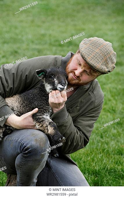 A farmer holding a young lamb in his arms checking on the animal