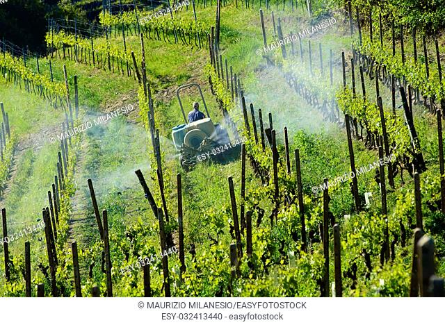 Farmer with tractor between vineyards for the chemical treatment of grapes