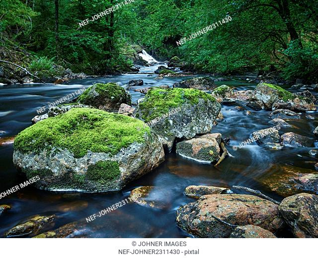 River with rocks in forest