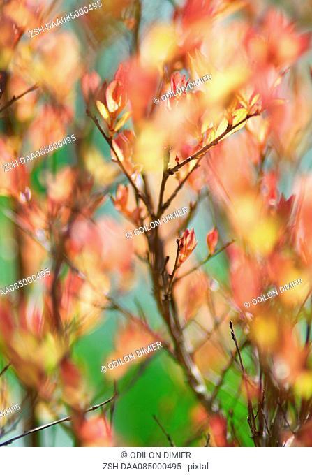 Spring foliage, full frame