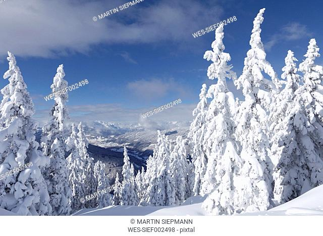 Austria, Salzburg County, View of snow covered firs on mountain