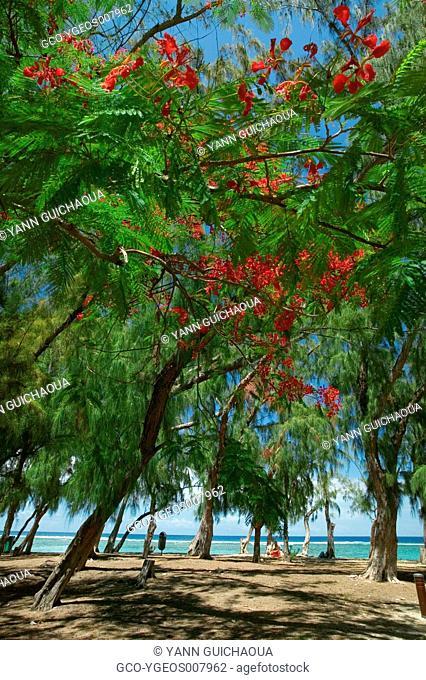 HERMITAGE BEACH - REUNION ISLAND -