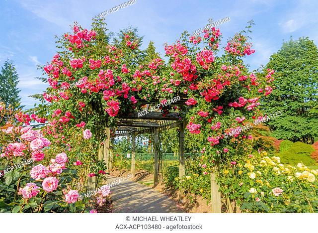 The Rose Garden, Centennial Park, Burnaby Mountain, Burnaby, British Columbia, Canada