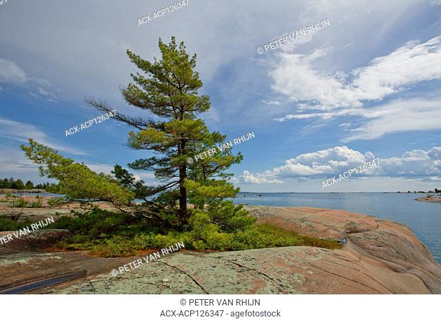 Iconic White Pine along the west coast of Phillip Edward Island,Georgian Bay,near Killarny Provincial Park,Ontario, Canada