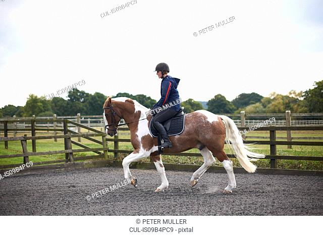 Young woman riding horse around paddock