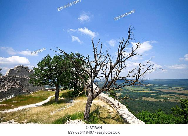View and ruins of Rezi castle with bare tree, Hungary