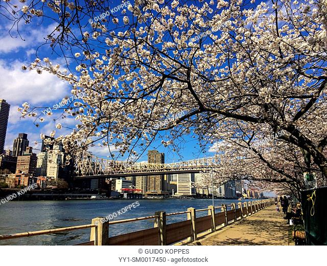 New York City, USA. View on the Ed Koch Queensboro Bridge and Manhattan from Roosevelt Island