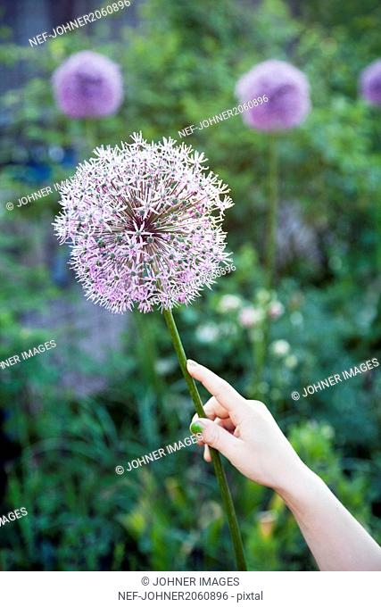 Close-up of womans hand holding flower