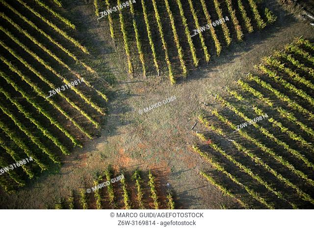 The new agricultural technologies applied to a new plant of rows of vines, taken from above
