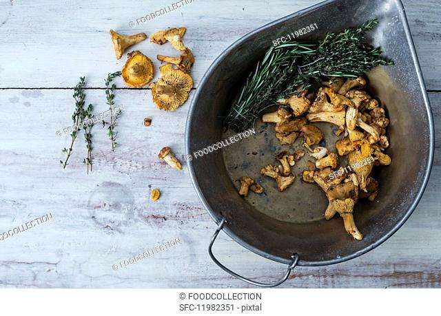 Chanterelle mushrooms in a cast iron bowl with fresh thyme and rosemary on a white wooden surface