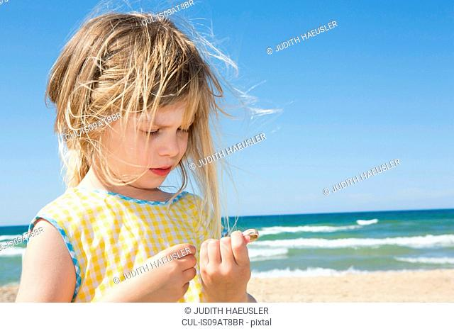 Girl with blond flyaway hair looking at seashell on beach