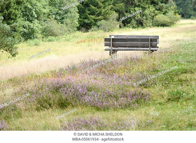 Landscape, seat, valley, broom moor, Calluna vulgaris, blossom