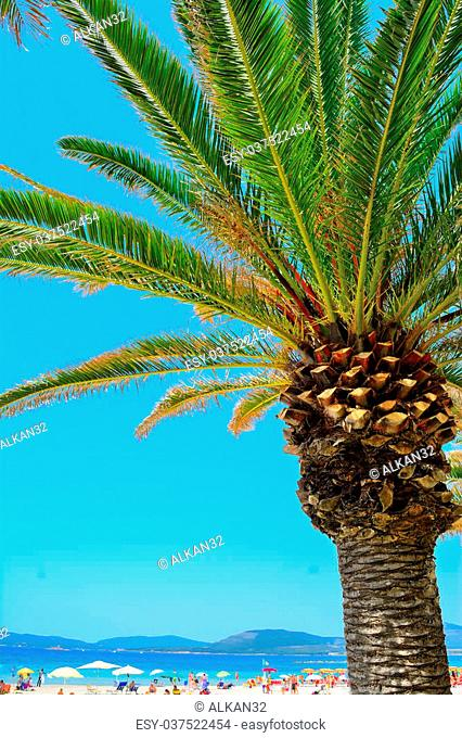 palm tree by the sea in Alghero, Italy