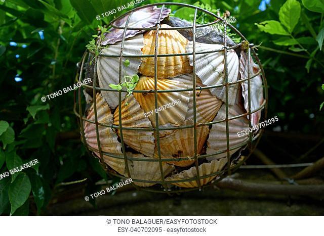 Combarro Galician village sea shells basket in Pontevedra Galicia Spain