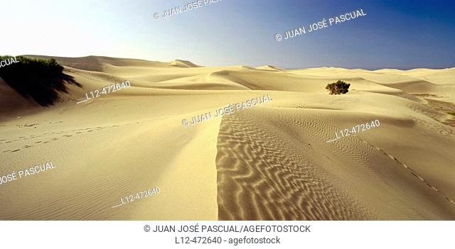 Maspalomas dunes, Gran Canaria. Canary Islands, Spain