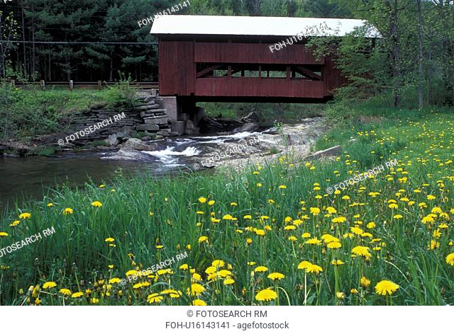 covered bridge, dandelions, spring, Northfield Falls, VT, Vermont, Upper Covered Bridge crosses Cox Brook with dandelions along the bank of the river in the...