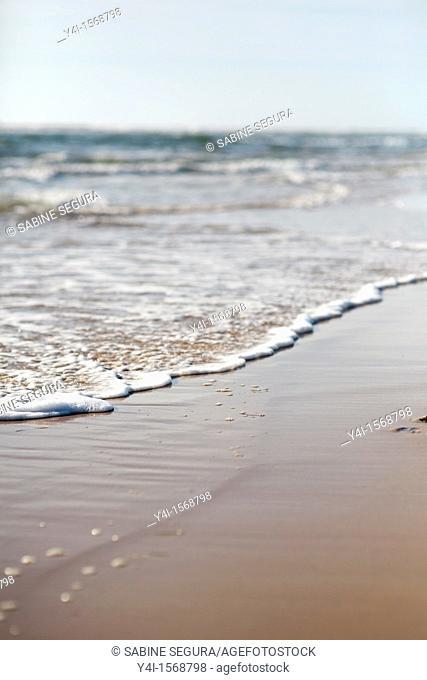 Beach of Cap-Ferret  Gironde  Aquitaine  France