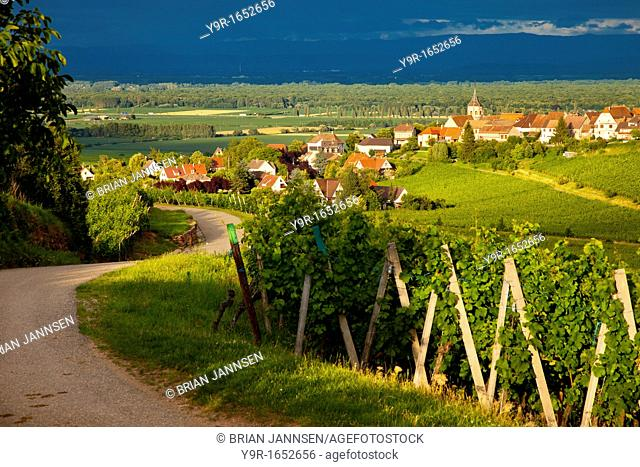 Setting sunlight on the vineyards of the Grand Cru and the village of Zellenberg in Alsace, Haut-Rhin France