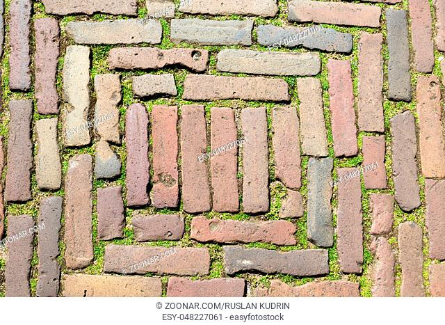 Brick pavers with grass sprouted in the sunlight