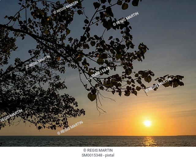 Sunset and tree branches silhouettes at Cullen Bay Beach in Darwin, Northern Territory, Australia