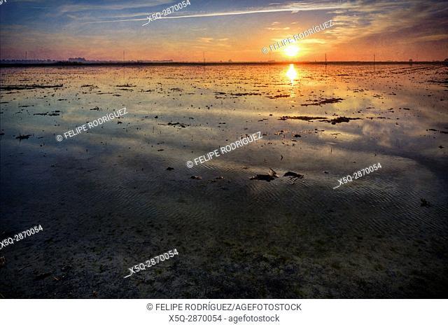 Sunrise in the rice fields, La Puebla del Rio, Seville, Spain