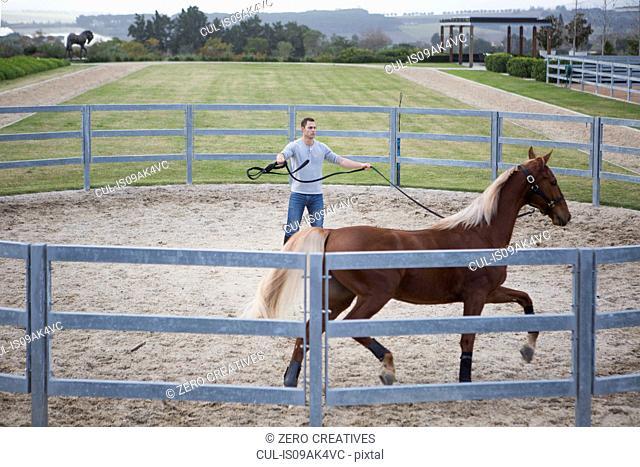 Stablehand exercising palomino horse around paddock ring