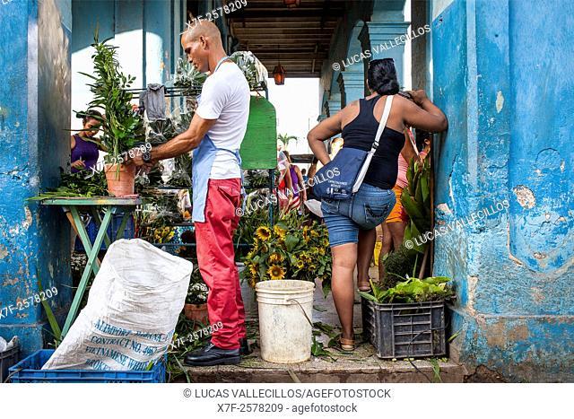 Florist male preparing flowers in flower shop, Habana Vieja district, La Habana, Cuba