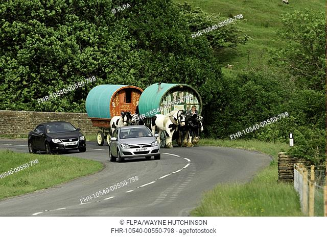 Horse drawn caravan on road with cars, heading to Appleby Horse Fair, on A683 between Sedbergh and Kirkby Stephen, Cumbria, England, june
