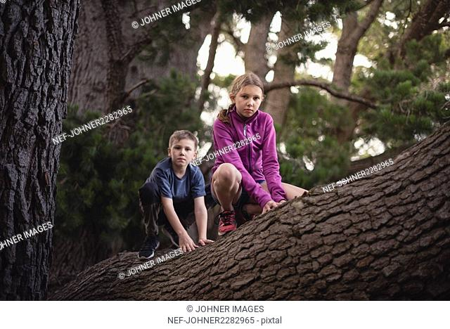 Boy and girl on tree